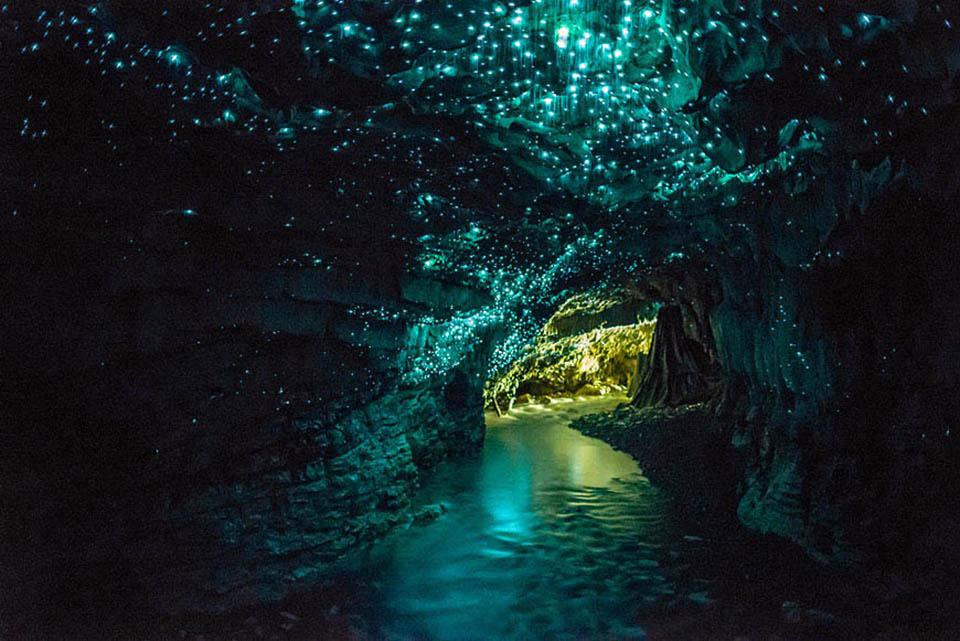 Waitomo-Glowworm-Caves-une-grotte-recouverte-de-vers-luisants-en-Nouvelle-Zélande